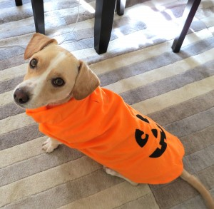The 3 Most Important Halloween Safety Tips for Dogs