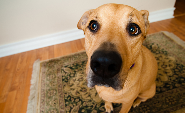 Keeping your dog from begging for table scraps